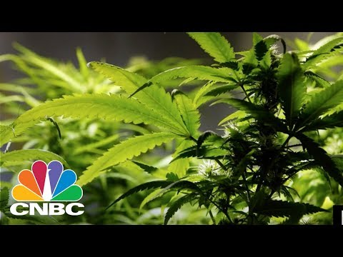 Bitcoin Offers The Cannabis Industry An Alternative To Banks | CNBC