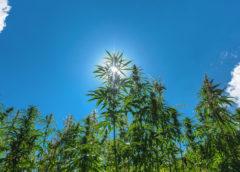 New Marijuana ETF 'YOLO' Now Has Listed Options